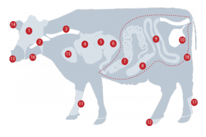 Beef Production